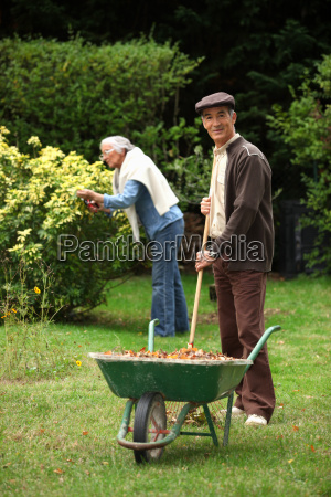 pares idosos que recolhem as folhas