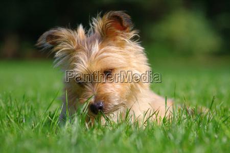 mein, hund - 5985783