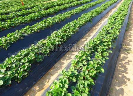 luz alimento saude agricola industria agricultura