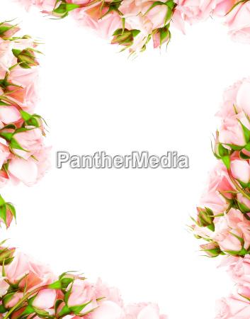 flor planta rosa valentine card quadro