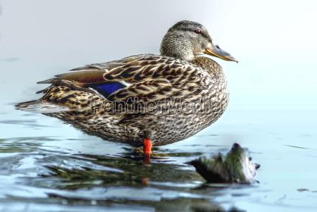 ambiente passaro animais passaros patos natureza