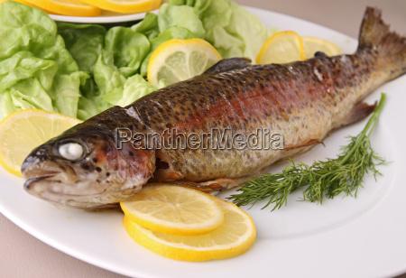 alimento peixe pesca truta refeicao grelha