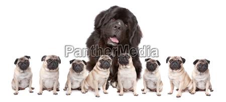 big, dog, small, dog - 6681191