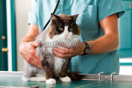 cat check up