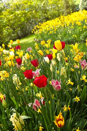 jardim flor planta flores tulipas primavera
