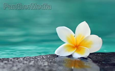 flor planta asia indonesia cheiro agua
