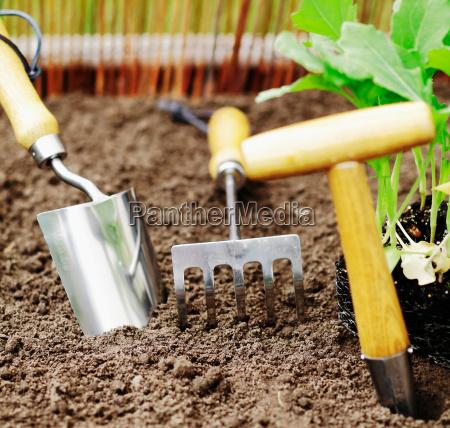 ferramentas de jardim para o transplante
