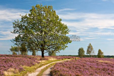 lueneburg heath caminho com a paisagem