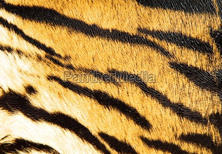 close up moda animal marrom asia