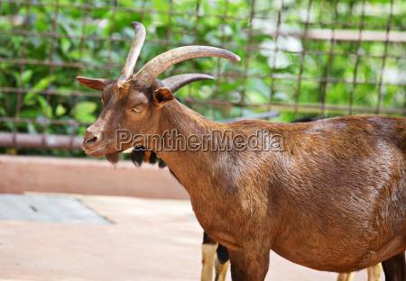 alimento belo agradavel animal mamifero marrom