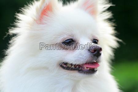 folha animal animal de estimacao retrato