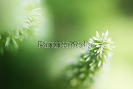 baggrund spredt planter