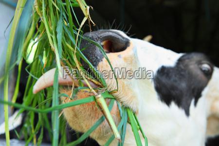 fechar agricola industria animal mamifero agricultura