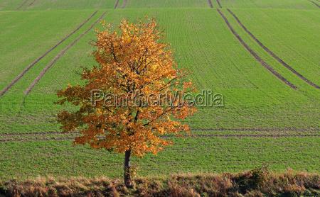 cor arvore folhas colorido bordo paisagem