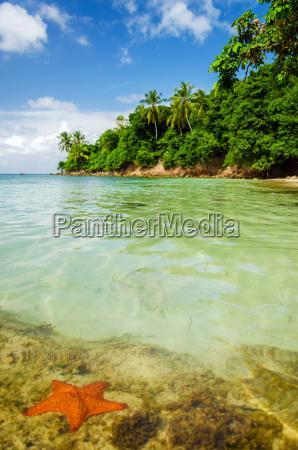 starfish e agua desobstruida