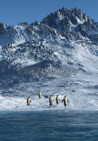 animais antartico gelo pinguim neve agua