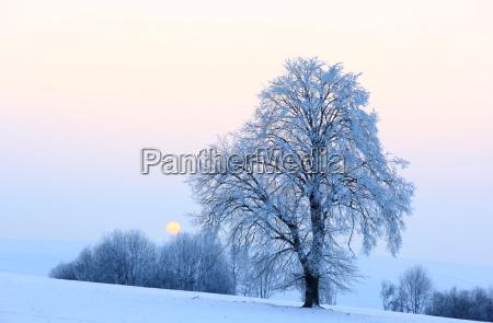 tree winter sunset evening winter landscape