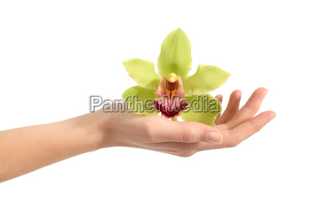 beautiful woman hand holding a green