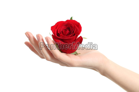 beautiful woman hand holding a red
