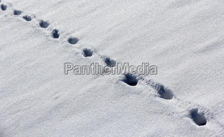 winter sense ice snow nature tracks
