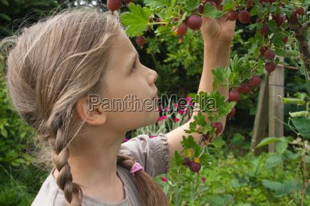 jardim jardins baga groselhas jovem loira