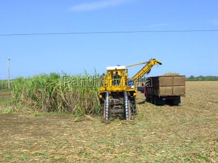 conduzir agricultura maquina cana de acucar