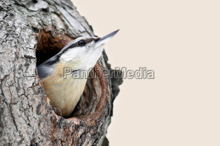 ambiente passaro animais passaros ave canora