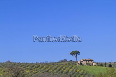 fazenda em montepulciano