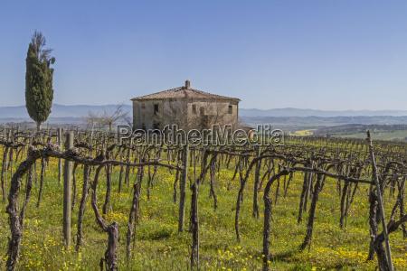 casa construcao vinhedo toscana fazenda quinta