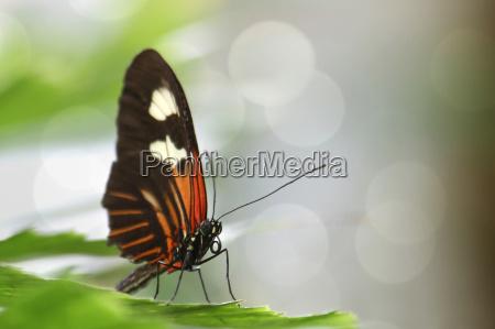 ambiente animal borboleta animais borboletas natureza