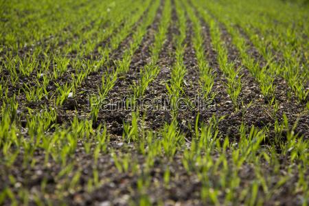 agricultura campo semente sementes