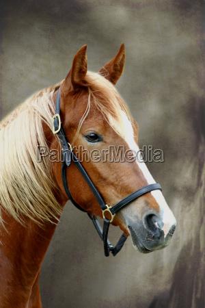 ambiente cavalo animal animais retrato cavalos