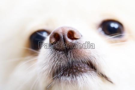 fechar close up animal animal de