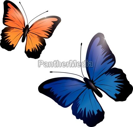 borboletas brilhantes