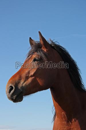 cavalo animais de estimacao cavalos mamiferos