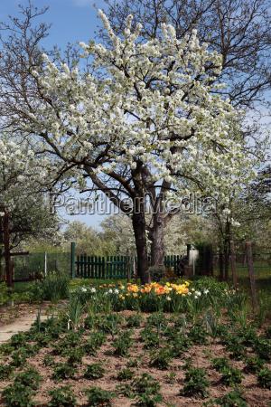 trae traeer have blomst blomster plant