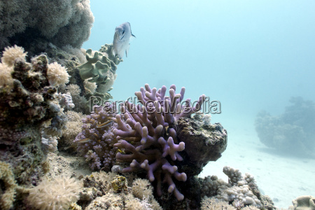 recife coral com coral da capa