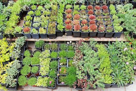 plantas de bercario