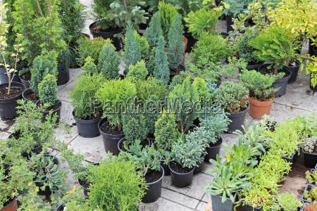 plantas perenes