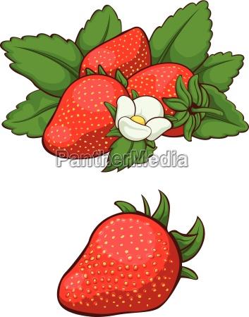 morango fresca