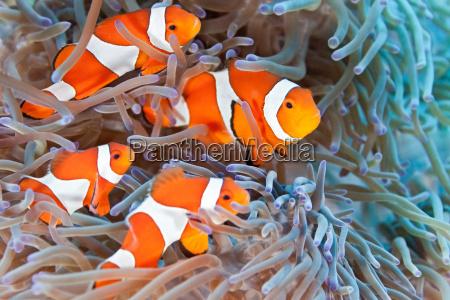 peixe subaquatico animais selvagens anemona agua