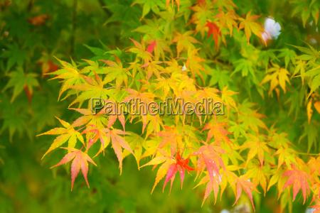 folha arvore verde dourado bordo amarelo