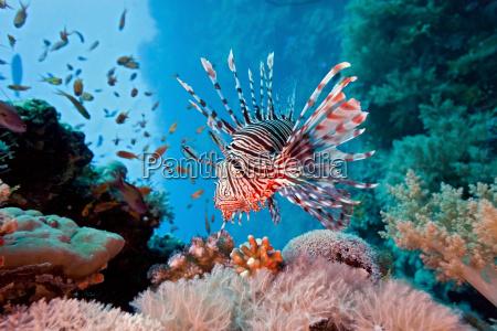 peixe subaquatico animais selvagens recife agua