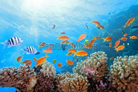 peixe reflexao subaquatico espelho animais selvagens