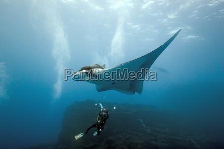 subaquatico raio de luz fotografo viga