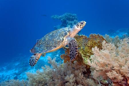 sea, turtle, - 9782340
