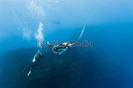 peixe raio de luz viga mergulhador
