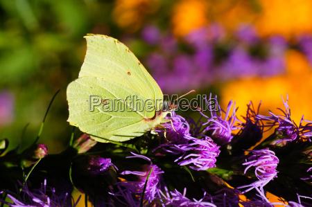 close up inseto flor planta borboleta
