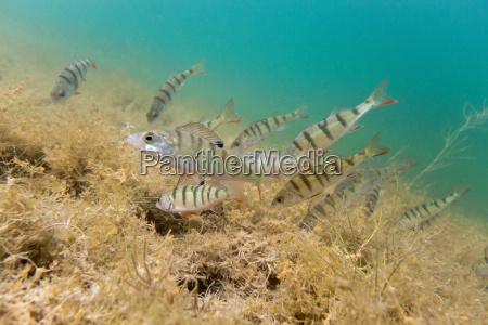 animal peixe subaquatico animais selvagens predador