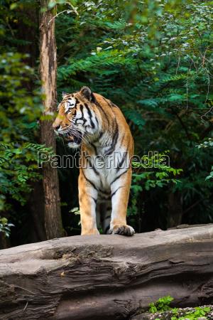 perigo belo agradavel enorme arvore animal